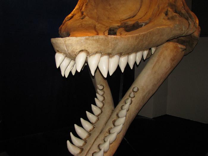 Los depredadores más temibles de la historia Levboca