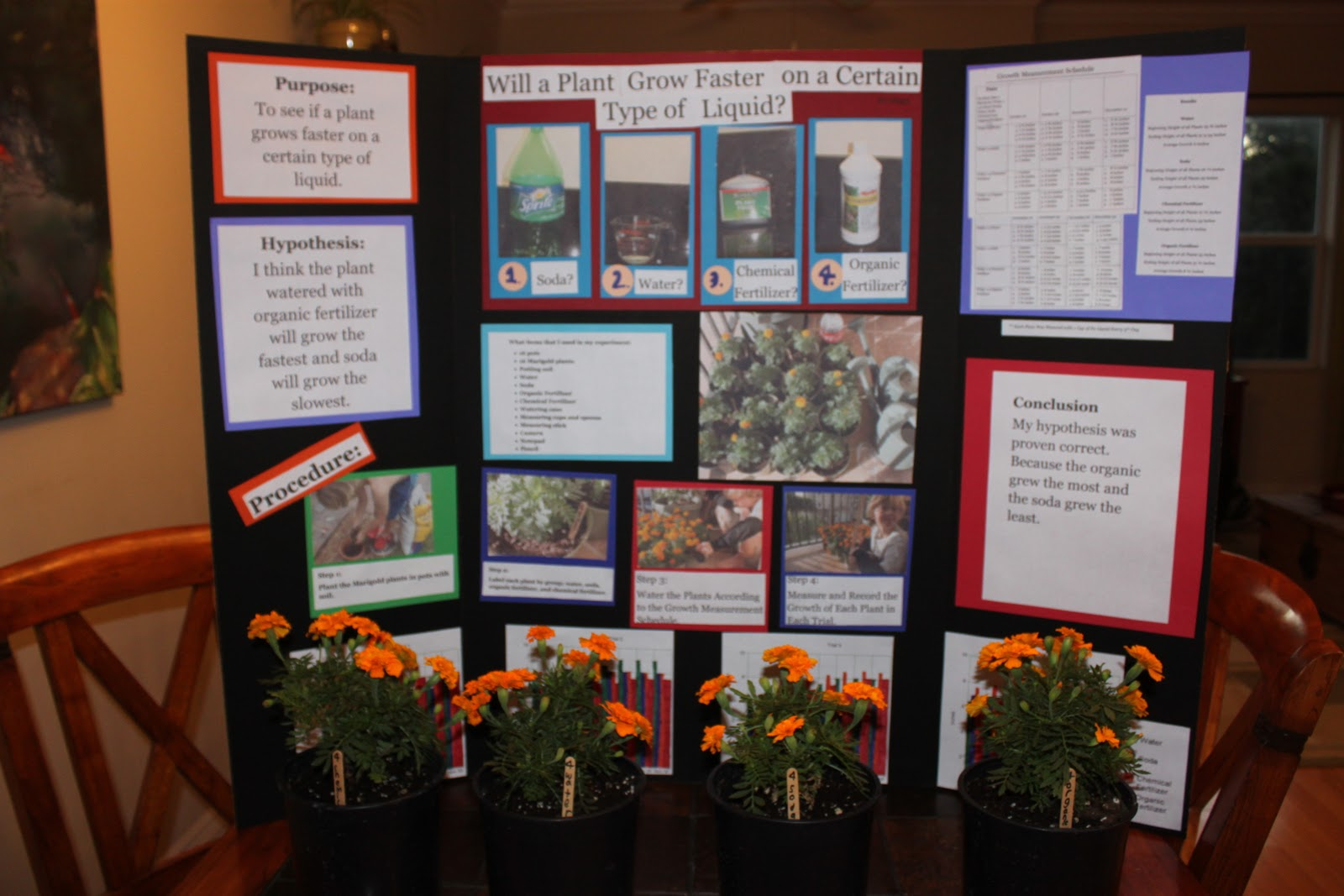 investigatory project on plant growth In this page you can find investigatory project of biology,biology  effect of sugar on bean plant growth:  biology class 12 projects| investigatory.