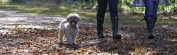 Hondenwandelcoaching - samen met jouw hond