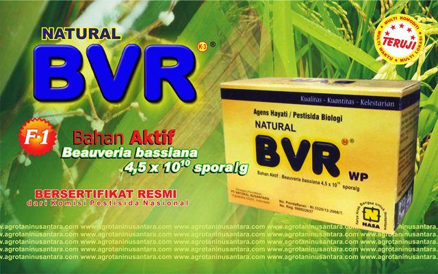 Natural BVR, Agens Hayati Pengendali Hama Tanaman. Bersertifikat Resmi dari Komisi Pestisida Nasional | www.agrotaninusantara.com