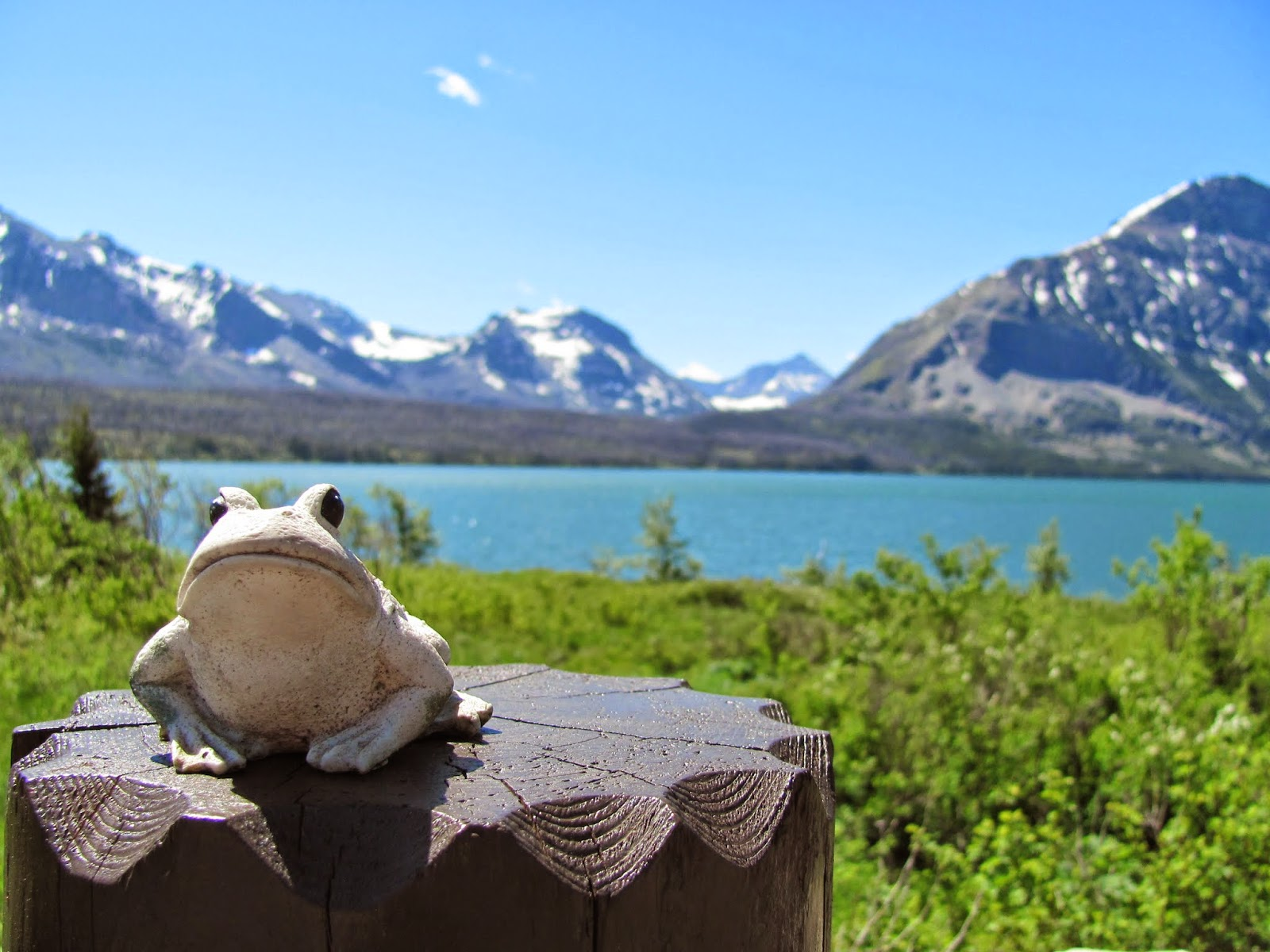 Frog poses on a fencepost near St. Mary Lake at Glacier National Park in Montana