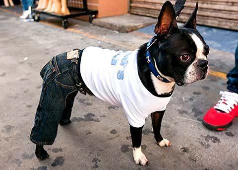 [Image: dog-in-jeans1.jpg]