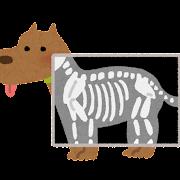 犬のレントゲン検査のイラスト