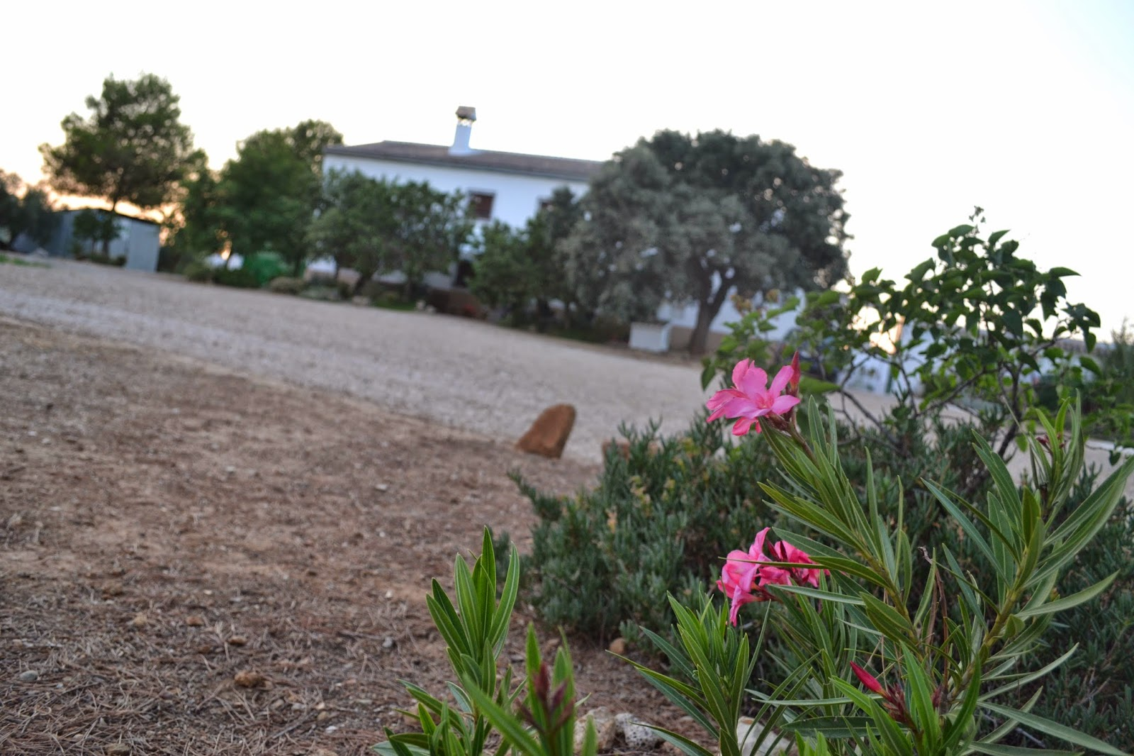 Vivienda tur stica de alojamiento rural cortijo casa nueva for Piscina loja granada