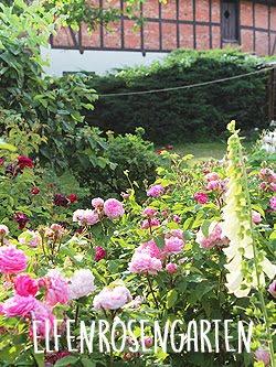 Rosensommer