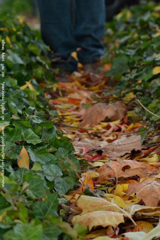 Autumn Fallen Leaves Path Walk