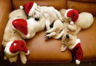 funny dogs welcome Christmas