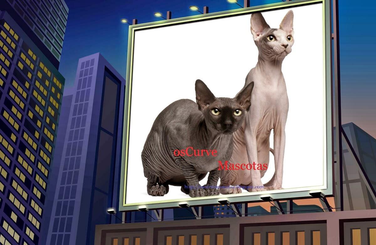 osCurve Mascotas