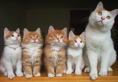 Yuk, Kita Kenali Beberapa Perilaku Kucing !! [ www.BlogApaAja.com ]