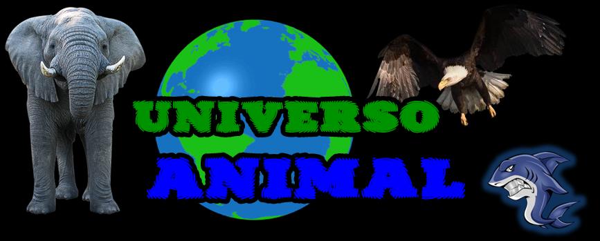 Universo Animal