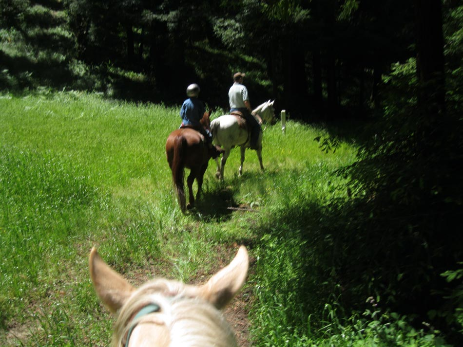 Equestrian writers wanted