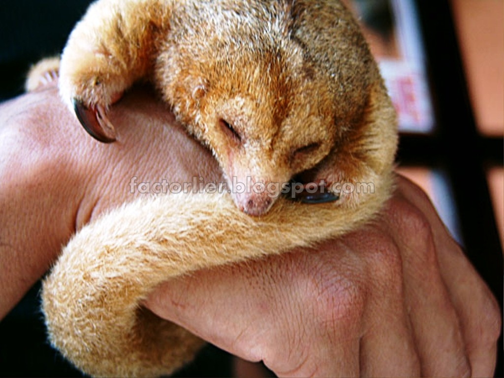 Silky Anteater Movie Search Engine At Search Com