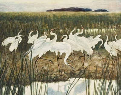 Dance of the Whooping Cranes by N. C. Wyeth