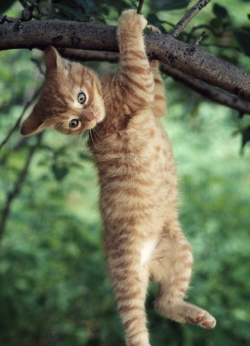 Hang in There Cat Hanging From Tree HD wallpaper