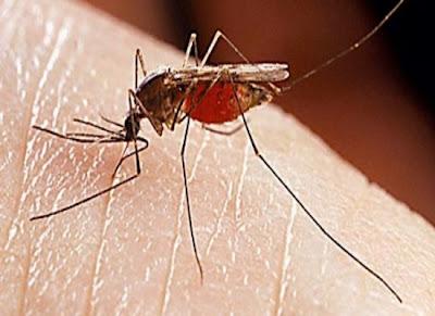 Συναγερμός για ελονοσία στον Έβρο εξαιτίας των λαθρομεταναστών!