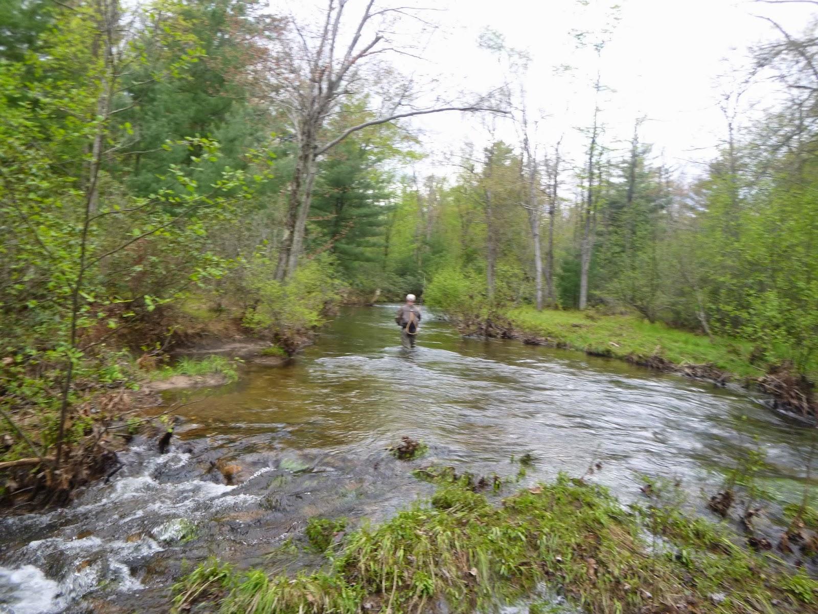Brookies and bronzebacks fishing creek and white deer for Deer creek fishing