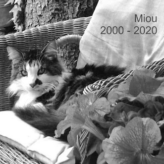 Miou the boss   =^..^=