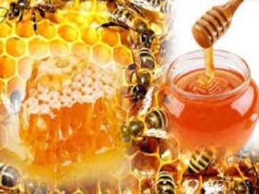 gambar manfaat dan khasiat madu untuk kesehatan