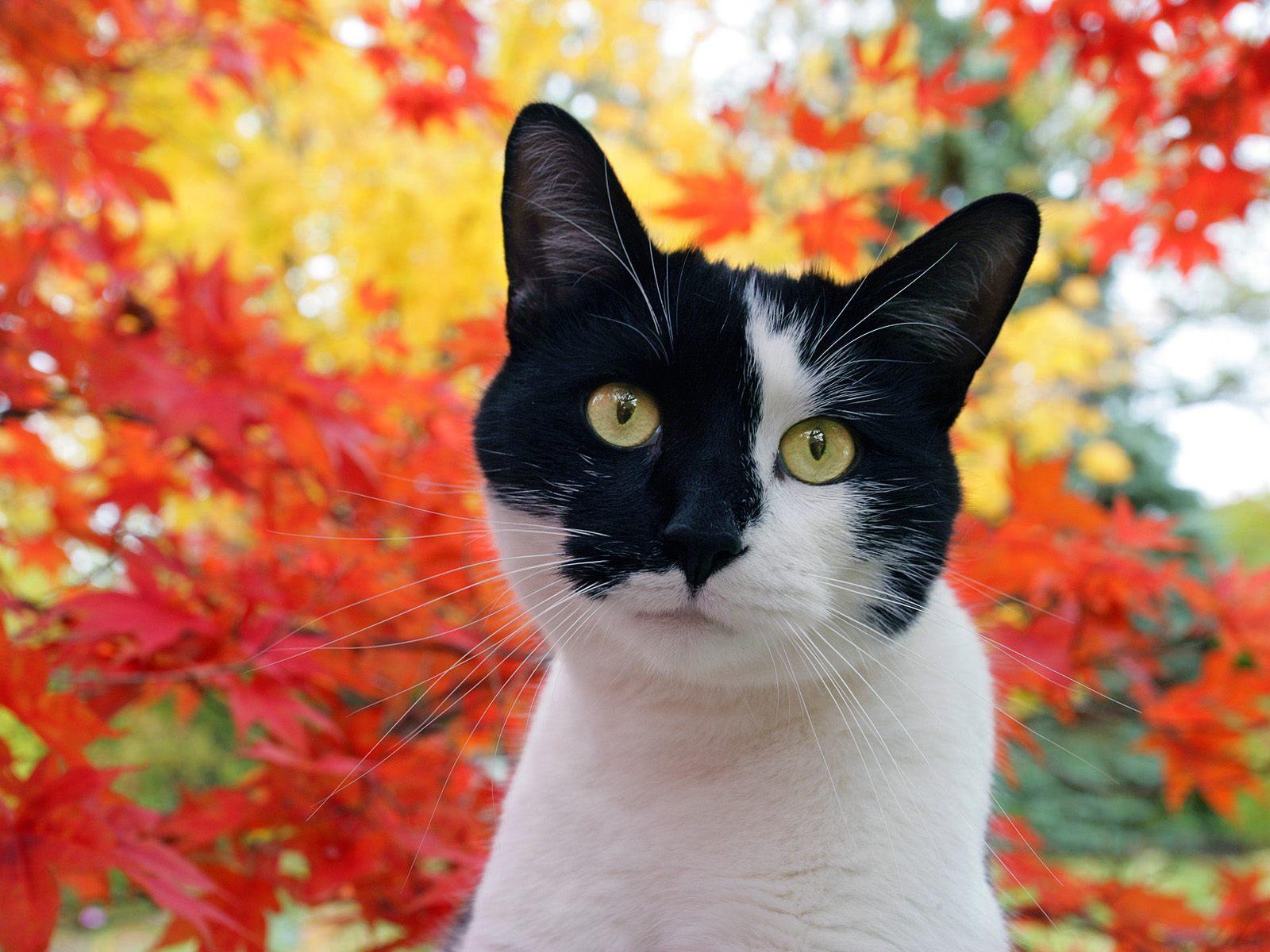 http://2.bp.blogspot.com/-zwYYUjO5cqc/TwgDoQDFuvI/AAAAAAAABKI/JTx3B76uDXA/s1600/Cat_1.jpg