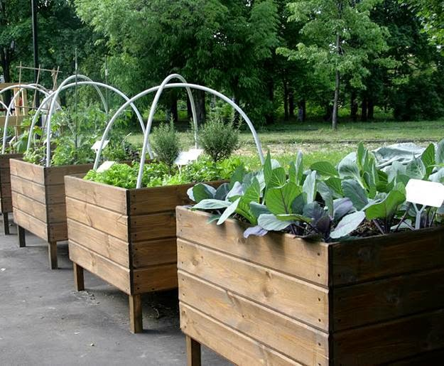 growing vegetables in wooden boxes