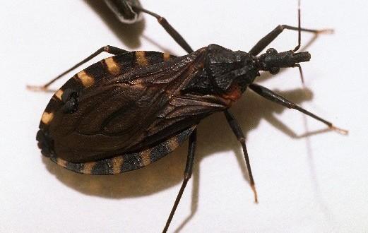 Advertencia: Mira porque, si ve este insecto alrededor de usted. Conseguir a un médico inmediatamente. Por favor compártelo.!
