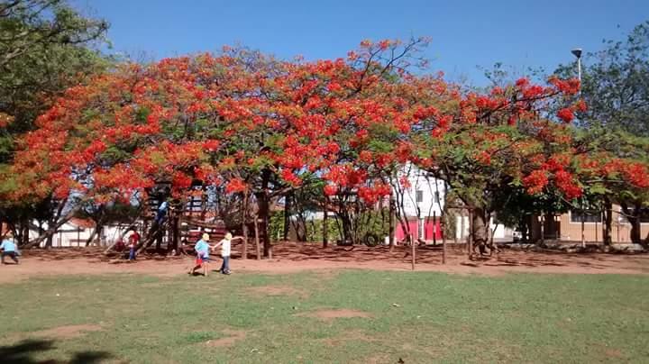 Parque da escola