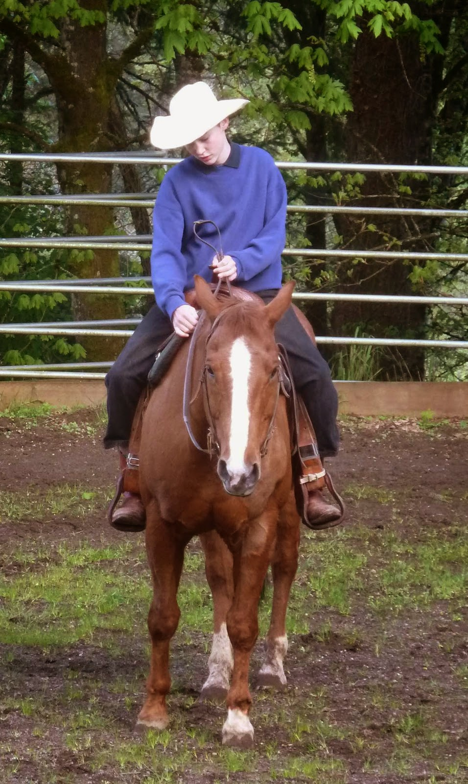 Equestrian Blog Of The Day - Dances With Horses