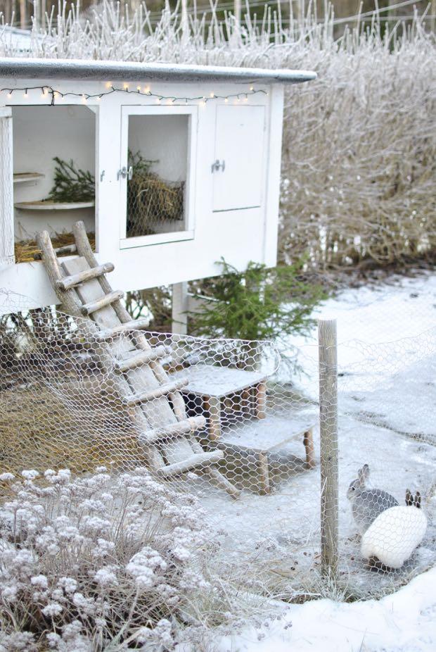 kaninbur vinterbur jul