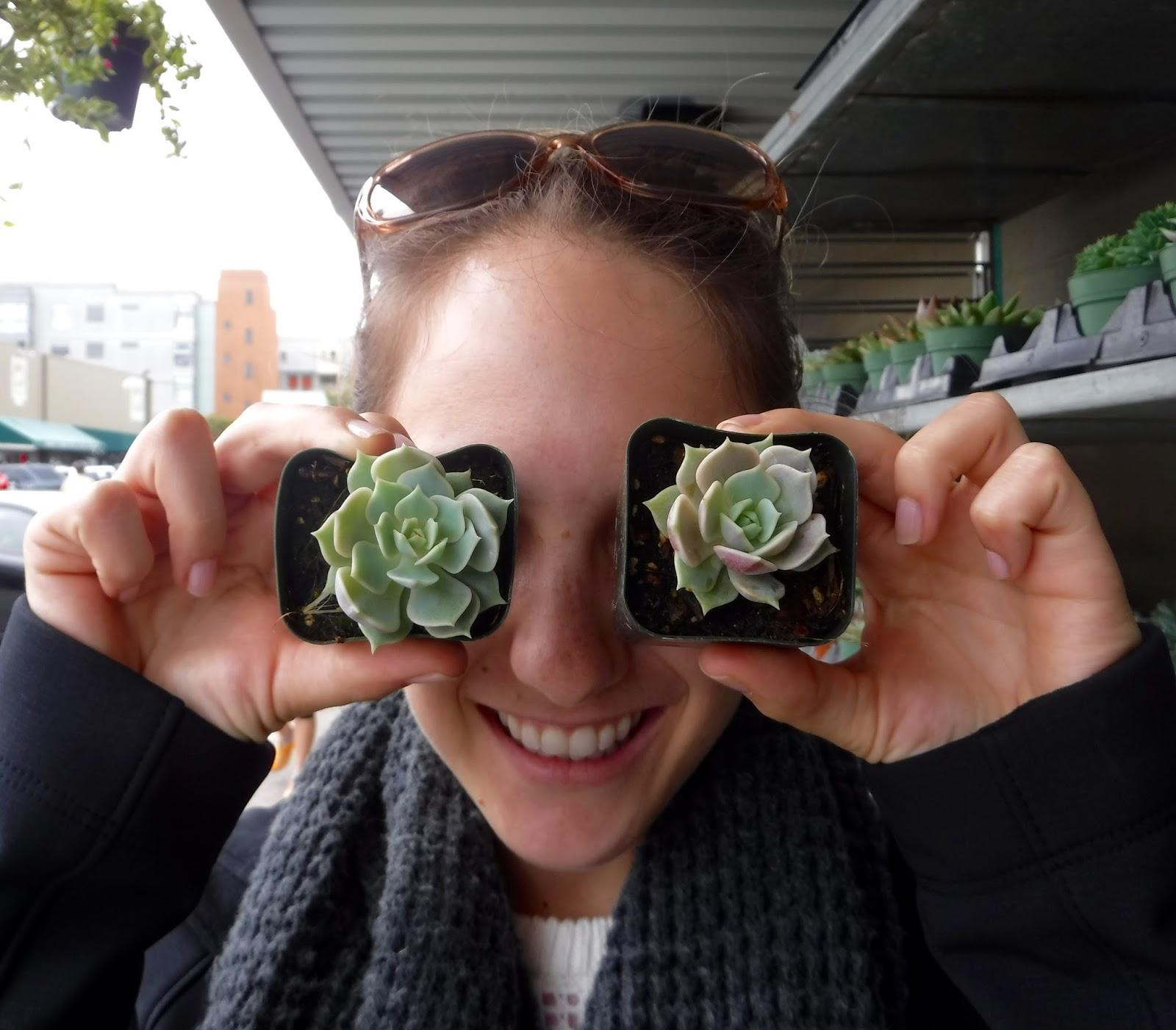 Succulents - greysuedeblog.com