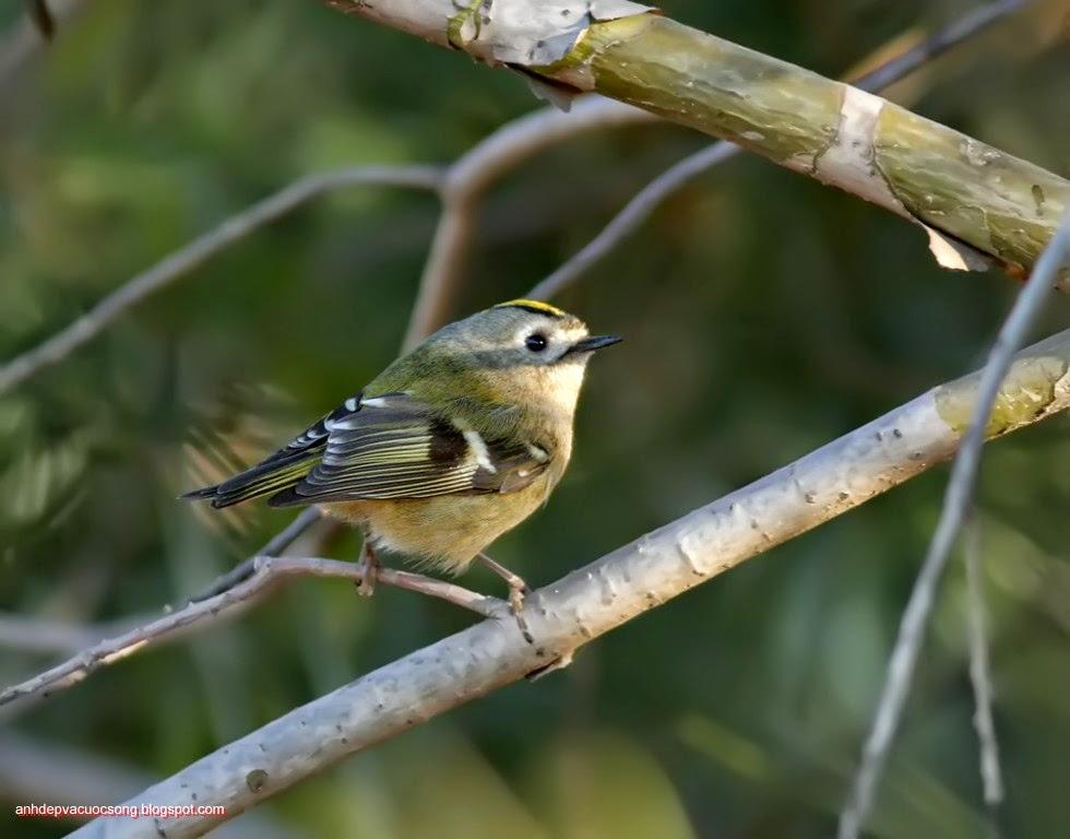 Ảnh thiên nhiên: Chú chim nhỏ 1