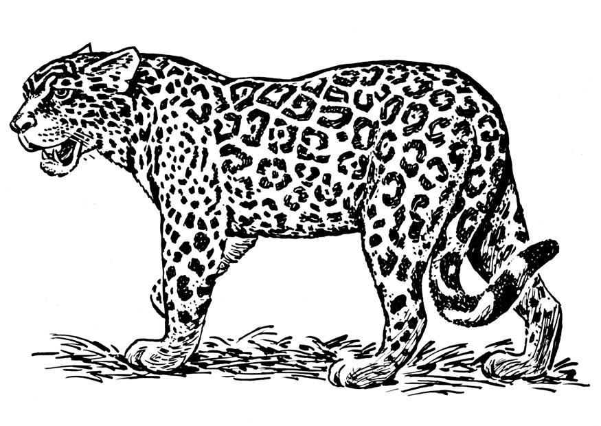 Leopardo Para Colorear. leopardos para colorear az dibujos para ...
