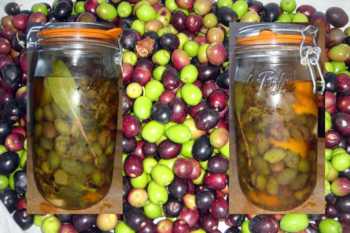 Quand Ramasser Les Olives