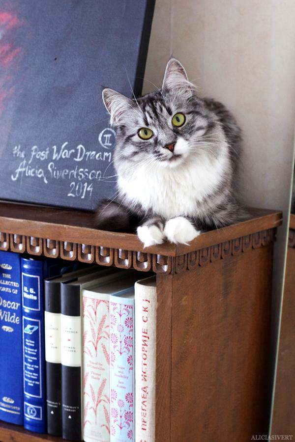 aliciasivert, alicia sivert, alicia sivertsson, katt, cat, katten vifslan