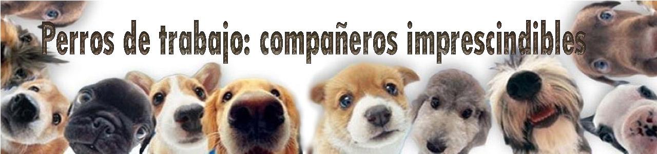 Perros de trabajo: compañeros imprescindibles