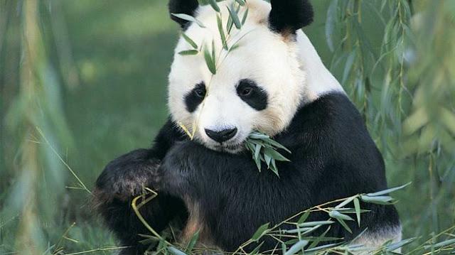 Panda meals