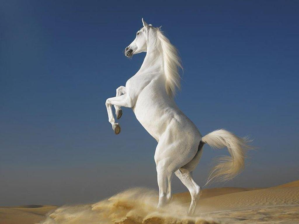 Amazing   Wallpaper Horse Nature - %251+beautiful+horse+wallpaper+(1)  Collection_46378.jpeg