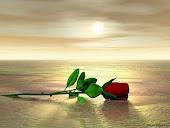 Falam as rosas :