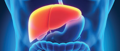 Recommendations to clean your liver