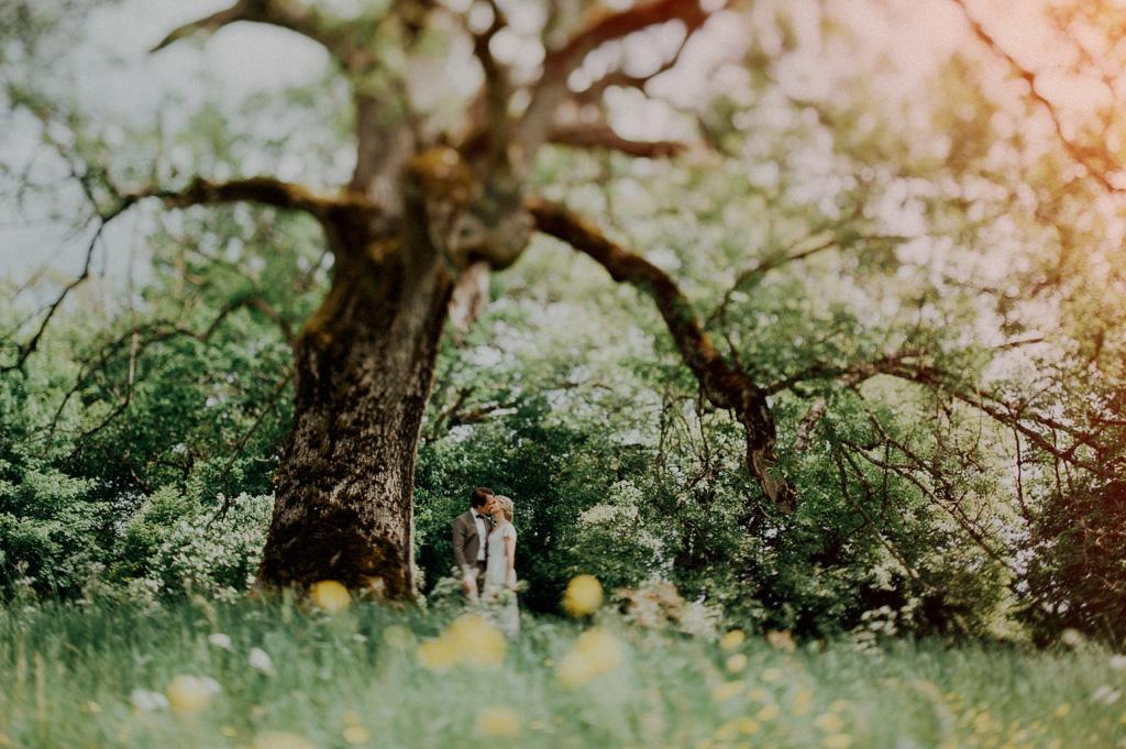 Bröllop | Kyss under ekträd | Bohemskt bröllopsfoto utomhus