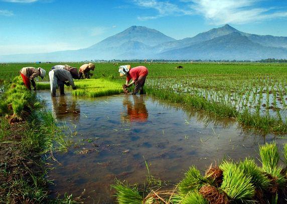 Kebun Rumah Pengertian Pertanian Secara Umum
