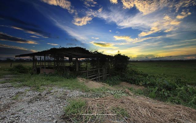 Gambar foto sunset dan pondok buruk di tepi sawah