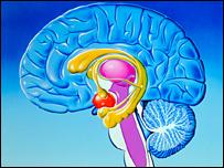 sistema limbico e neocorteccia