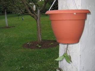 cloche de jardin