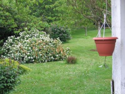 je suis au jardin faire pousser des tomates l 39 envers le bricolage. Black Bedroom Furniture Sets. Home Design Ideas