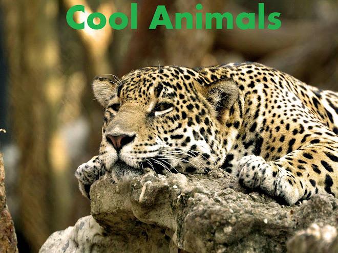 Cool Animals