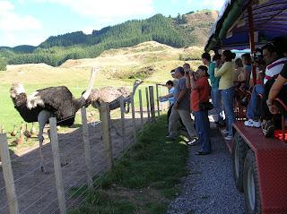 Agrodome, Nueva Zelanda, vuelta al mundo, round the world, La vuelta al mundo de Asun y Ricardo