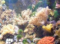 corales, Gran barrera de corales, Cairns, Australia, vuelta al mundo, round the world, La vuelta al mundo de Asun y Ricardo