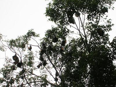 murcielagos, Cairns, Australia, vuelta al mundo, round the world, La vuelta al mundo de Asun y Ricardo