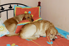 Ginger n Buddy's Blog