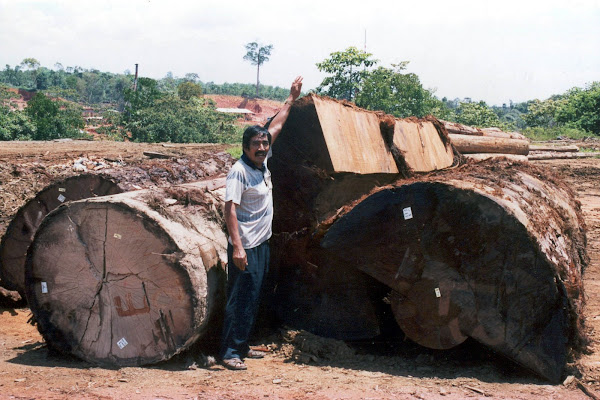 Building the Naga Pelangi, selecting the timber: